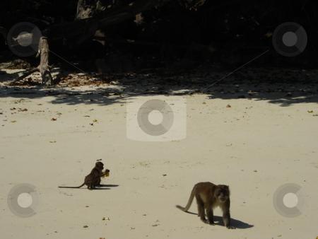 Monkey Beach in Thailand stock photo,  by Ritu Jethani
