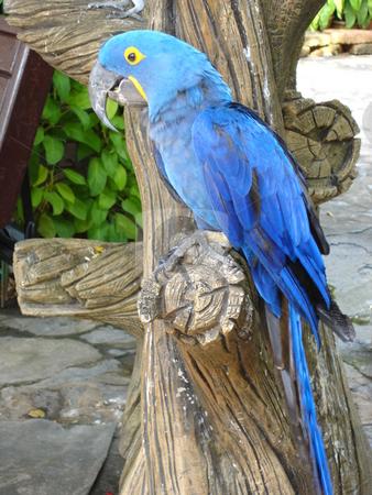 Parrot stock photo,  by Ritu Jethani