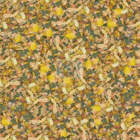 Dry leaves seamless composable pattern stock photo, Seamless pattern made of dry leaves. It's composable like tiles without visible connecting line between parts by Ivan Paunovic