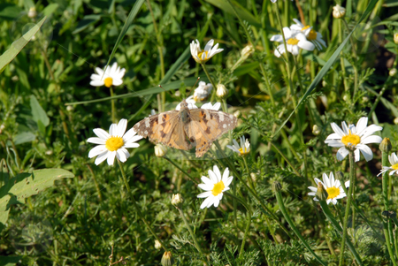 Butterfly on the heather stock photo, Butterfly on the heather field in summer sunlight by Joanna Szycik