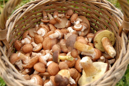 Mushrooms in basket stock photo, Mushrooms in basket on background of green grass by Joanna Szycik