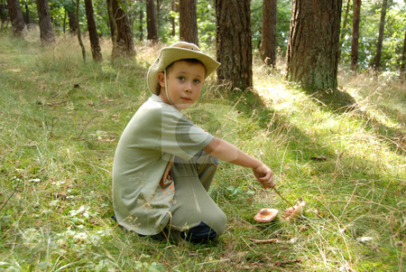 A boy picking mushrooms in a forest. stock photo, A boy picking mushrooms in a forest. by Joanna Szycik