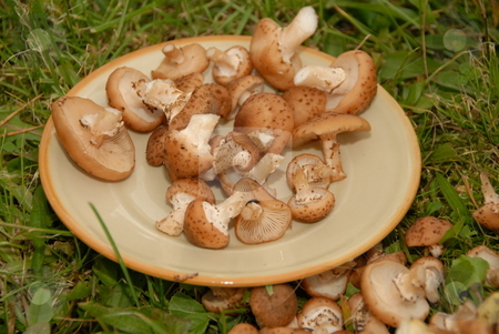 Mushrooms on the plate stock photo, Mushrooms on the plate on background of green grass by Joanna Szycik