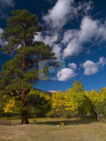 Evergreen in Autumn stock photo, Near Endovalley Picnic Area, Rocky Mountain National Park. by John McLaird