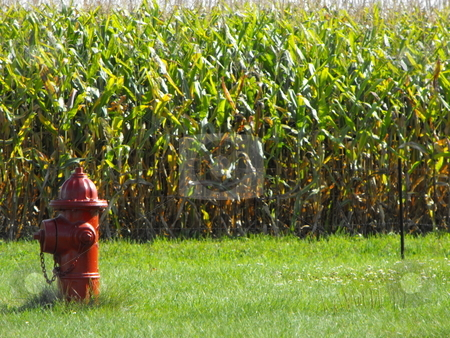 Protecting the corn field? stock photo, A red fire hydrant is not a normal sight on the edge of a corn field, but an image like this is not contrary to the rural towns in Iowa or the midwest, especially with the rise in the value of corn as a commodity used for food or biofuel. by Dennis Thomsen