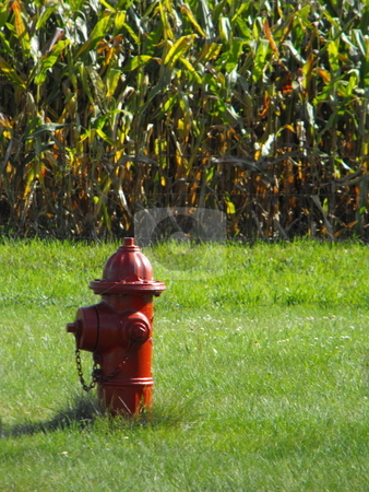 Protecting the corn field? stock photo, A red fire hydrant is not a normal sight on the edge of a corn field, but an image like this is not unusual to the rural towns in Iowa or the midwest. by Dennis Thomsen