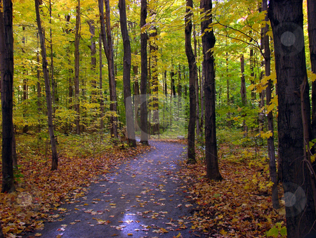Fall foliage stock photo, Trail in the forest. Beautiful fall season in Canada. by Fernando Barozza