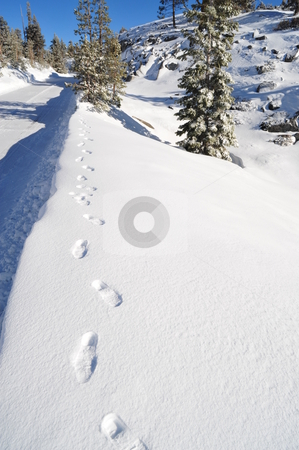 Snowy Foot Prints stock photo, Foot prints in fresh snow along a high mountain road in the california sierra mountains by Lynn Bendickson