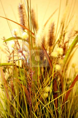Assorted Decorative Dried Grass stock photo, Decorative dried grasses with a yellow clored background by Lynn Bendickson