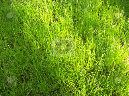 Closeup to a green field  stock photo, Texture of natural green grass and herbs in the ground by Natalia Gesto