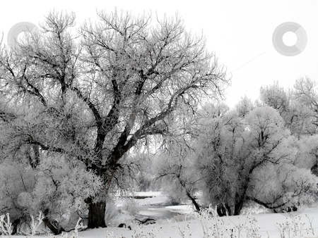 River Frost stock photo, Big Thompson River on a foggy and frosty morning. by John McLaird