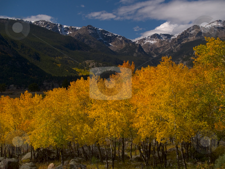 RMNP Autumn stock photo, Aspen stand in Rocky Mountain National Park by John McLaird