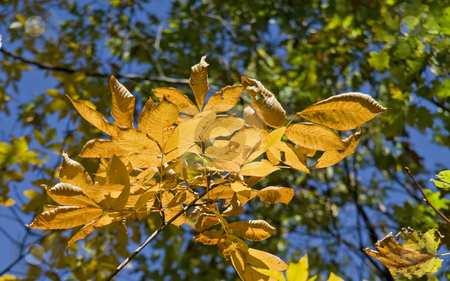 Autumn leaves stock photo, Colorful leaves on branches during autumn. by Robert Ranson