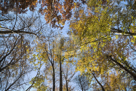 Autumn forest stock photo, Colorful tree tops during fall in the middle of a forest. by Robert Ranson