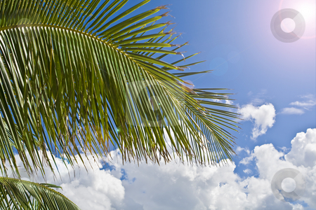 Palm tree paradise stock photo, Palm tree with blue sky and clouds in background with sun shining down. by Robert Ranson