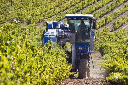 Grape harvest machine stock photo, Grape harvesting machine working in a vineyard of Alentejo, Portugal by Manuel Ribeiro