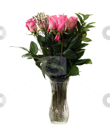 Dozen Roses stock photo, A dozen roses in a glass vase, isolated against a white background by Richard Nelson