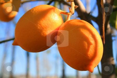 Lemons stock photo,  by Michael Felix