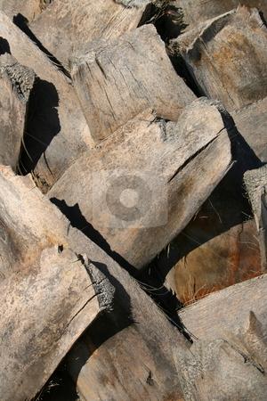 Palm Tree Close Up stock photo,  by Michael Felix