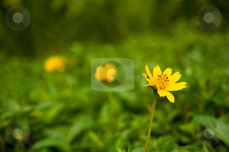 Three Flowers stock photo, Three flowers with eyes leading arrangement by Pawee Lorsuwannarat