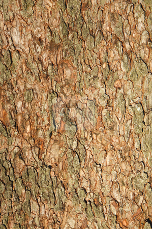 Tree bark close up natural background texture. stock photo, Tree bark close up natural background texture. by Stephen Rees