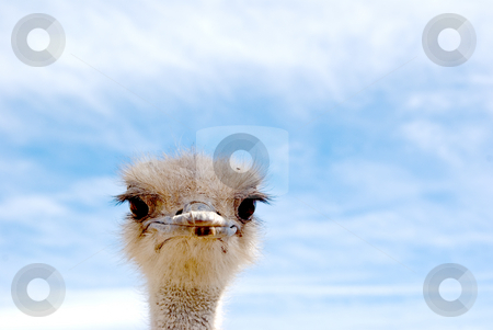 Bird stock photo, A close up of a bird looking at you, sky background by David Gallaher