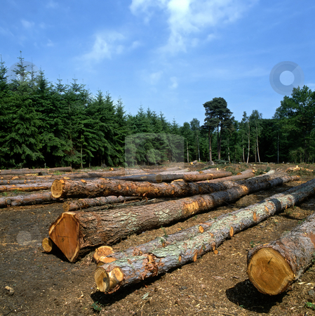 Log farm stock photo, Felled trees in a forest by Paul Phillips