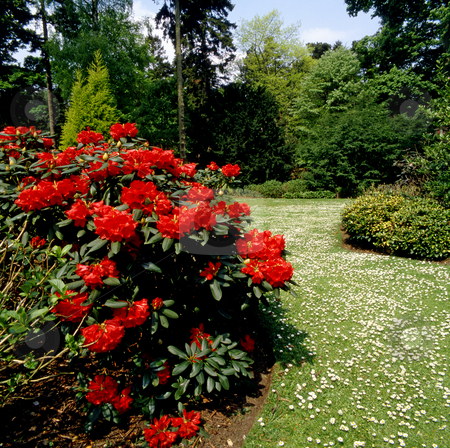 Summer path stock photo, Path through a formal garden in summertime by Paul Phillips