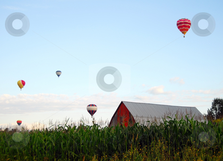Hot Air Balloons stock photo, Hot Air Balloons over a corn field by Alain Turgeon