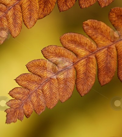 Dying Fern stock photo, Orange dying fern with a yellow background by Alain Turgeon