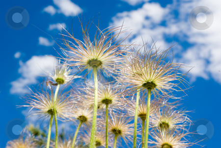 Sky plants stock photo, Plants growing up and into the sky by David Gallaher