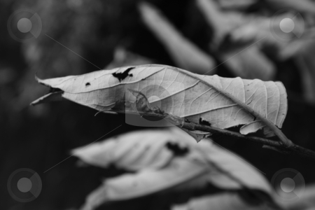 Burnt Leaves stock photo, Burnt and Dry Leaves - Monochrome Image by Bhavesh Chhatbar