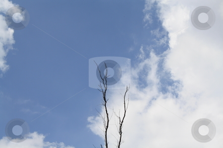 Reaching High stock photo, Trees Reaching High to Touch the Sky by Bhavesh Chhatbar