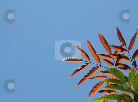 New And Old Leaves Against Blue Sky stock photo, New And Old Leaves Against Blue Sky by Bhavesh Chhatbar