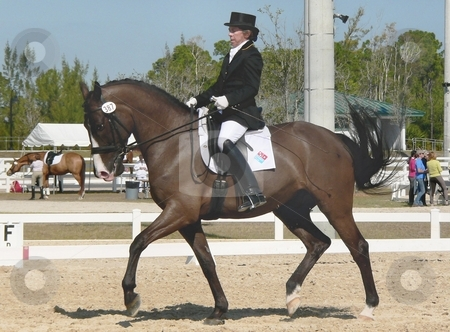 Dressage stock photo, Horse and rider preparing to compete in an international dressage competition in West Palm Beach, FL by Perry Correll