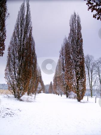 Winter alley stock photo, Alley in snow-covered german landscape near Bad Arolsen by Torsten Lorenz
