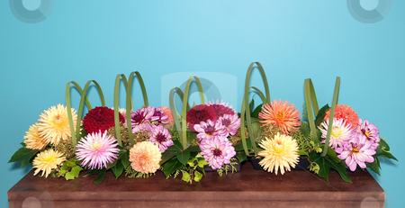 Dahlia Arrangement stock photo, A Long Floral Arrangement of Dahlias by Margo Harrison