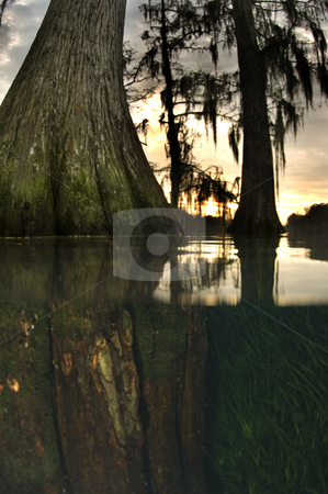Millpond Tree Over Under stock photo, Over Under view of a tree growing in a flooded pond with the sun setting in the background by A Cotton Photo