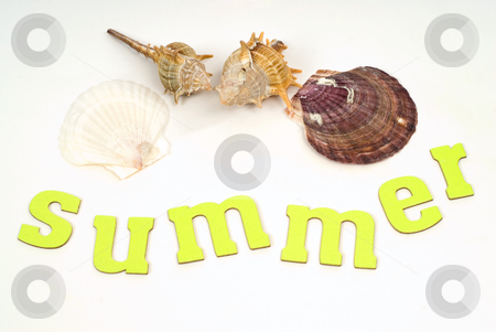 Sea Shells stock photo, Summer sea shells shot against a white background by Richard Nelson