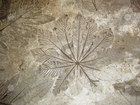 The Imprint Of Palm Leaves Set In Concrete Stock Photo