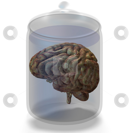 Human brain stock photo, Older human brain lies in a glas with clipping path by Ralf Kraft