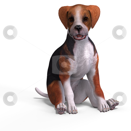 Cute puppy beagle stock photo, Very cute young dog over white with Clipping Path by Ralf Kraft