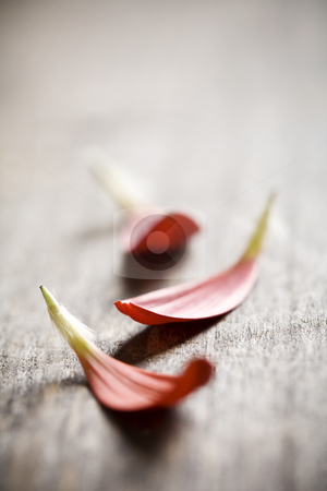 Petals on wood stock photo, Red petals on wooden surfface by Liv Friis-Larsen