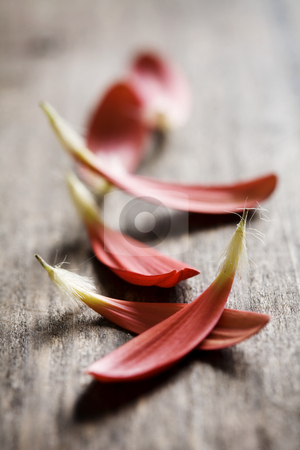 Red petals on wood stock photo, Collection of red flower-petals on wooden surfface by Liv Friis-Larsen