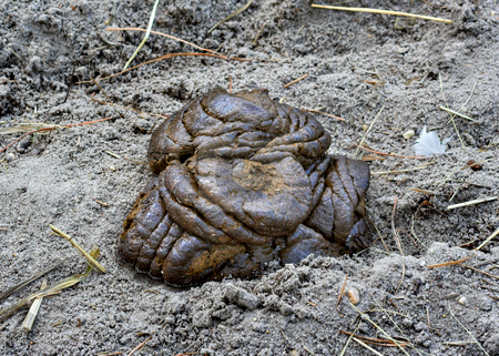 Poop stock photo, A mound of poop in the dirt by Stephen Bonk