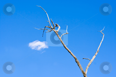 Sky, Tree and Cloud stock photo, A dead tree against a clear blue sky with a single white cloud by Stephen Bonk