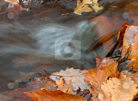 Water and Leaves stock photo, Leaves in and on the side of a stream near a small waterfall by Stephen Bonk