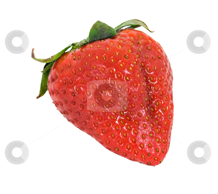 Strawberry stock photo, A strawberry isolated on a white background by Stephen Bonk