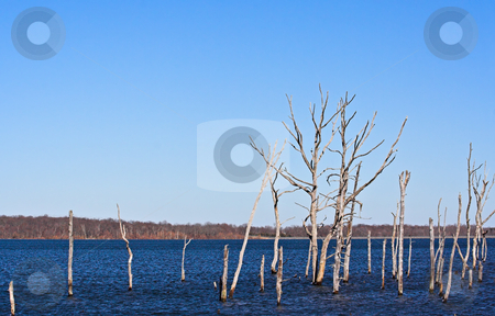 Dead Trees 2 stock photo, A reservoir filled with dead trees by Stephen Bonk