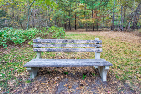 A Bench in the Woods stock photo, An old wooden bench in a wooded area of a park by Stephen Bonk